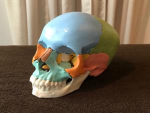 築地・銀座にある銀座スリーピース整体院の頭蓋骨のイメージ